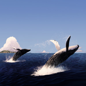 The jumping of whale