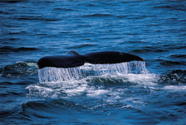 whale.3